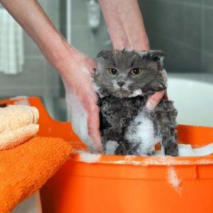 shampoing anti puce pour chaton